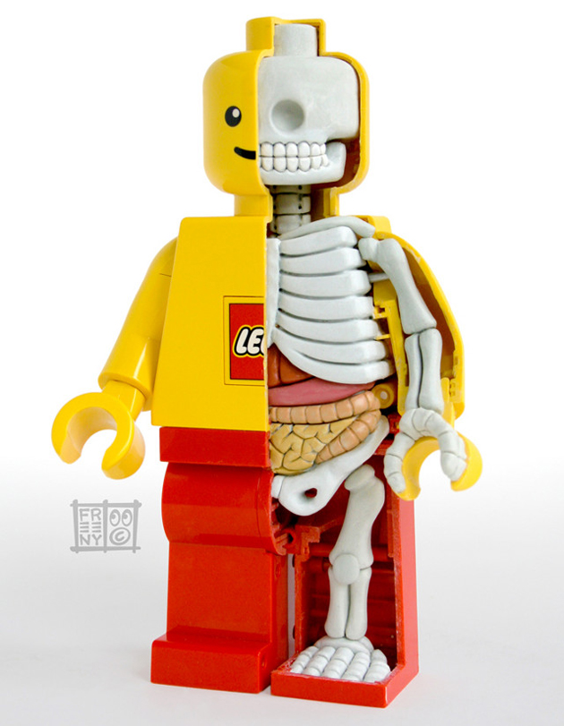 artist's depiction of the anatomy of a LEGO figure. Part of a skeleton and some organs are visible
