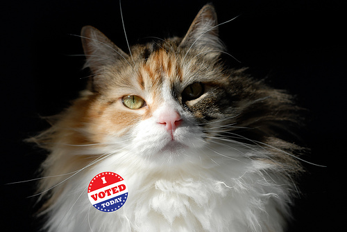"""cat with """"I Voted"""" sticker"""