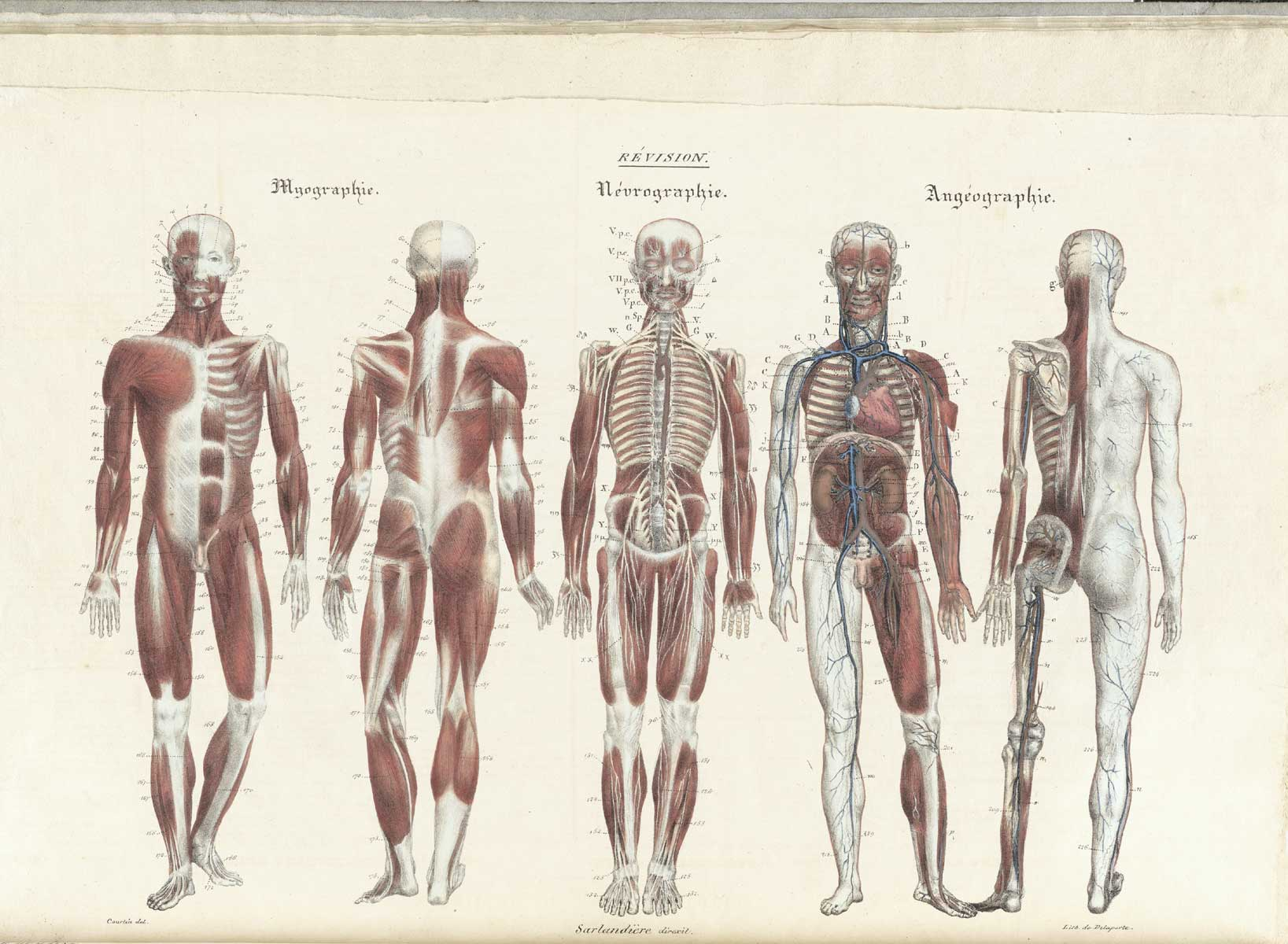 historical atlas of anatomy