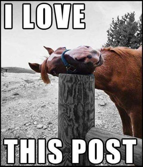A horse lays his head lovingly on a wooden post. The caption reads: I love this post.""