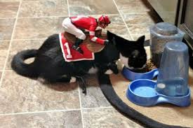 cat in jockey costume