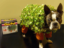dog in chia pet costume