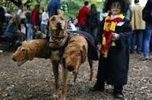 dog and child in joint harry potter costume