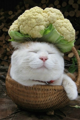 white cat sleeping in basket with vegetable on head